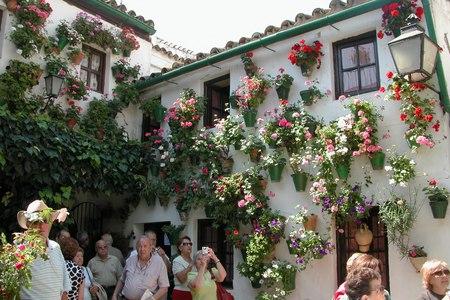 Cordoba flowers - flowers, cordoba, pots, espanna, wall, andalucia