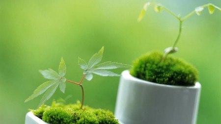 New Life Other Nature Background Wallpapers On Desktop