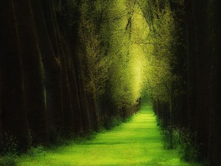 Forest of Dreams - forest, emerald forest, journey, sunlight, woods, emerald green, trees, abstract, photography, path