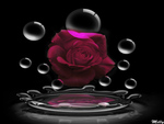 Love...as beautiful as a simple Rose for All of DN