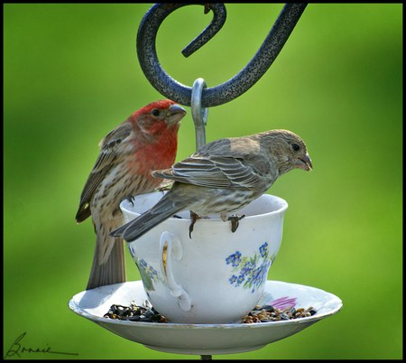 Tea Time - birds, feeding, lovely, teacup