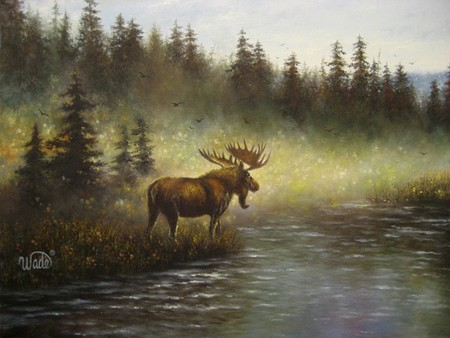 moose in the wild - forest, water, moose, grass, woods, trees, animals, deer