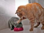 Kitty revenge