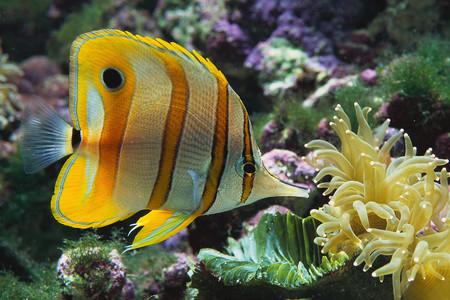 Fish - fish