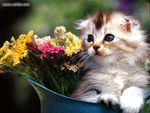 cute kittie in a flower pot