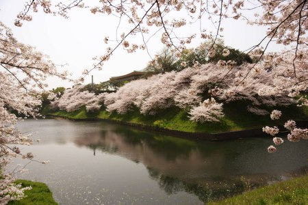 Beautiful Spring Landscape - home, beautiful, spring, blossoms, nature, season, river, white, landscape