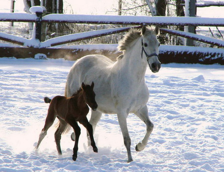 Tree day old foal - secure, tree, snow, day, foal, mother, old