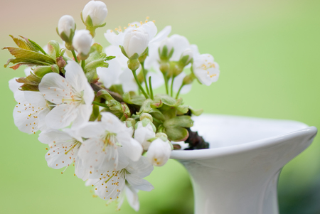 Cherry Blossom - sakura, flowers, twig, white, summer, tree, trees, vase, blossom, flower, yellow, beauty, cherry, spring, blossoms, green