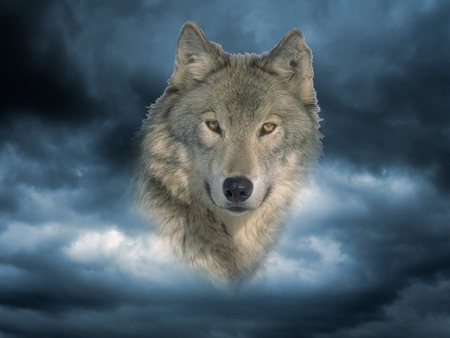 Timber face - friendship, grey wolf, wolf pack, dog, howling, wolf wllpaper, winter, majestic, howl, spirit, canine, solitude, lobo, lone wolf, beautiful, snow, mythical, wolf, wolves, pack, grey