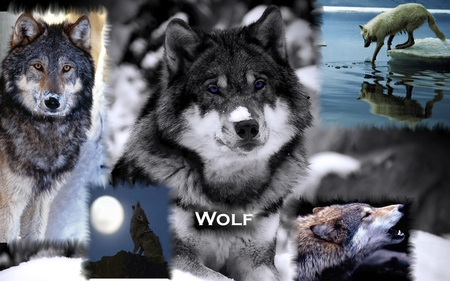pretty wolf collage collages abstract background wallpapers on
