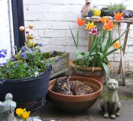 Potted Cat. - frog, pots, tulips, cat