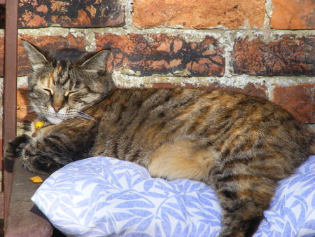 One Comfy Cat. - cat, wall, cushion, tabby