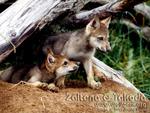 Curious Pups