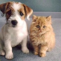 Innocent Looking Pets