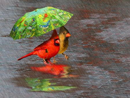 Comments On April Showers Birds Wallpaper Id 644735 Desktop