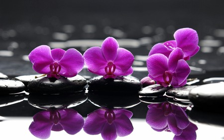 Reflection - fashion, entertainment, photography, relax, abstract, flower, power, stone, feng shui, flowers, special, color, spa, nature, reflection, beauty, purple, stones, black