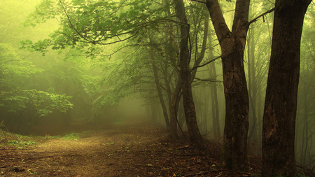 Green Mist Forest - beautiful, misty, path, nature