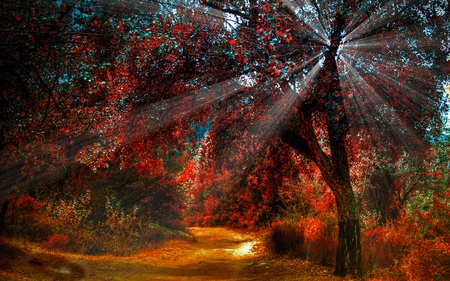 SUNBURST IN AUTUMN FOREST - season, light, sunrays, forest, beautiful, pathway, autumn