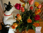 flower-lover cats