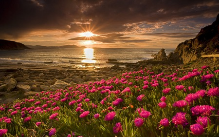 Sunset - rocks, image, sun, grass, rocky, sunset, bushes, afternoon, sundown, boat, nice, stones, multicolor, landscapes, heaven, flowers, flori, waterscape, paisage, sunbeam, hills, sunrises, dawn, ocean, scenecry, ocean waves, sepia skies, sunrays, munti, rays, coolness, mountains, seascape, red, hd, green vegetation, beautiful, breathtaking, platinum, silver, leaves, sand, green, cliffs, scenery, other, cloud, horizon, maroon, tree, paisagem, marveillous, flower, nature, desktop, branches, scene, oceans, pretty, clouds, cenario, filelds, beach, calm, scenario, splendor, beauty, pinks, evening, sunrise, morning, reflection, glare, islands, lovely, succulents, paysage, beautiful view, soare, cena, golden, shoreline, rockes, sky, panorama, set, water, cool, paradise, beaches, sunshine, fullscreen, bay, landscape, field, colorful, brown, gray, imperturbability, sea, photography, sunsets, de, land, horizons, pink, amazing, calmness, multi-coloured, view, sunlight, colors, spring, leaf, ripples, serene, plants, peaceful, colours, reflections, natural, daydaylight, coast, reflux