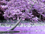 Purple-Pink tree