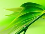 Bamboo Drops