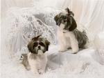 Dollie & Dellie
