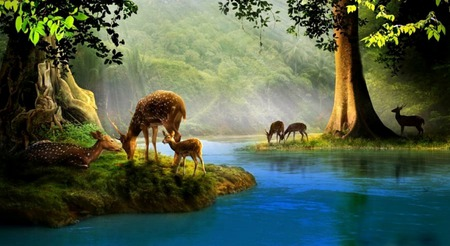 Serenity - stream, fawns, woods, creek, fog, deer, mist, doe, water