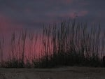 Sunset with Beach Grass