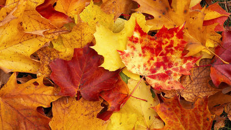Autumn Leaves - rust, brown, yellow, leaves, red, autumn