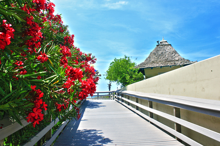 Deck Flowers - beach, pretty, tree, flowers, day, deck, wall, blue