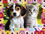 Best Flower Friends