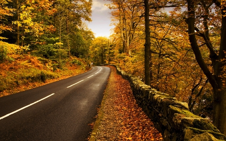 AUTUMN DRIVE - autumn, beautiful, road, peaceful, clean