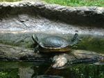 Acrobatic Turtle