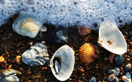 foam and seashells - beauty, seamwater, water, seashells, shell, wet, fun, ocean, beach, photography