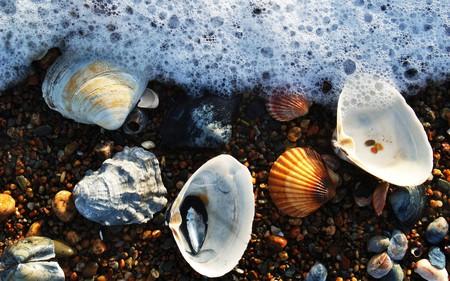 foam and seashells - seashells, shell, ocean, photography, wet, fun, water, beauty, seamwater, beach