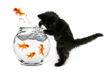 Cat Vs Goldfish 3d And Cg Abstract Background Wallpapers On