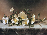 Cherokee Roses F1
