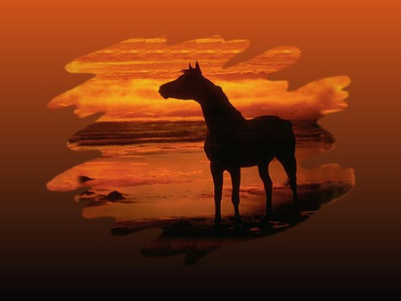 Sunset Silhouette - Horse F1 - silhouette, equine, photography, sky, sunset, red, horse, photo, nature
