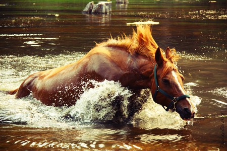 horse - beautiful, brown water, horse, blue