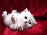 White Kitty Stretch