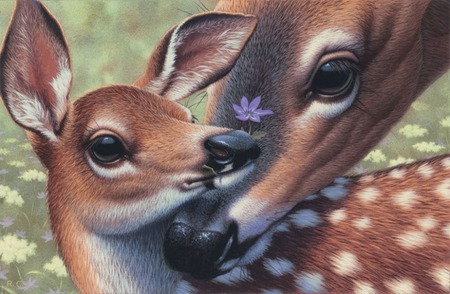 Flower for you - fawn, young, flower, spring, mother, field, deer