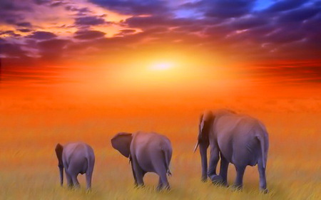 Giants of Africa - family, elephants, sunset, clouds, africa