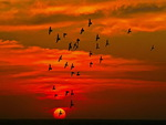 Flight in the burning sky
