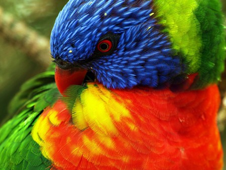 pretty parrot - beauty, yellow, colorful, blue, rainforest, parrot, forest, animal, tropical, bird, wild, green, red, nature