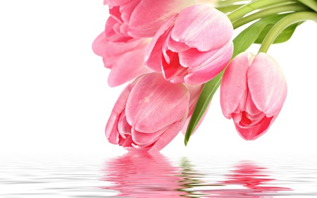 Pink Tulips - photography, pink, romantic, tulip, pink tulip, with love, for you, flowers, colors, tulips, nature, reflection, beauty, beautiful, lovely, pink tulips, romance, still life, pretty, green