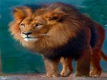 LION , TRUE  KING OF WILDLIFE