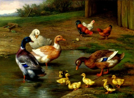 Jemimah Puddleduck And Friends - baby ducks, ducks, trees, barn, farm, water, puddle, pasture, ducklings, chickens