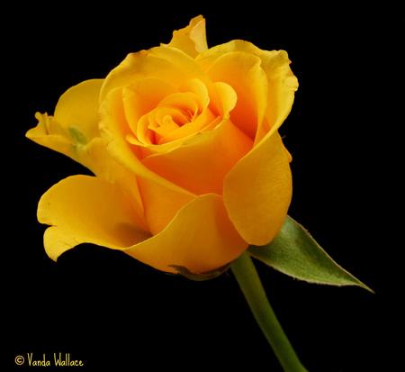 sunshine yellow - Flowers & Nature Background Wallpapers ...