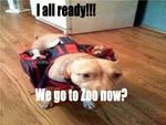 I ready lets go to zoo